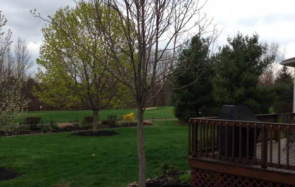 Tree Stump Removal and New Planting